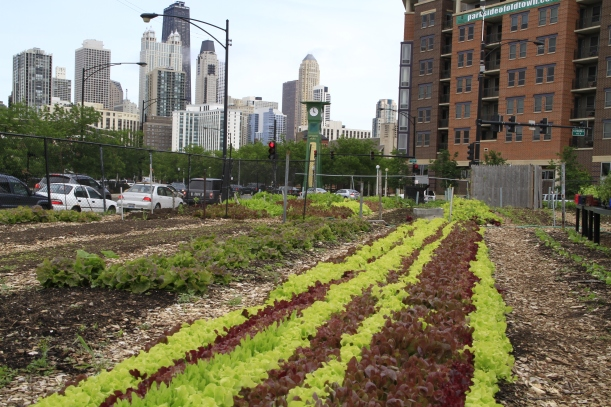 This farm in Chicago could be put to a better use leading to a more environmentally friendly and energy efficient city. (picture from thegreenhorns.wordpress.com)