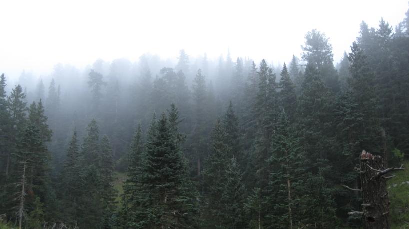 Sierra Blanca Mist